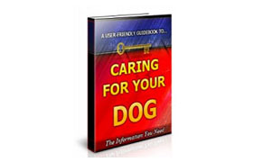 Caring For Your Dog The Information You Need