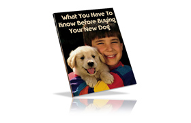 What You Have To Know Before Buying Your New Dog