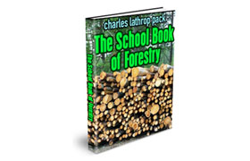 The School Of Forestry