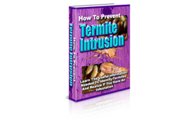 How To Prevent Termite Intrusion