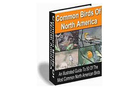 50 Most Common Birds of North America
