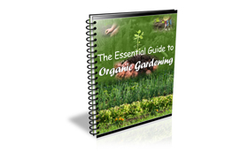 Essential Guide to Organic Gardening