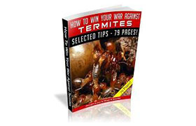 How To Win Your War Against Termites