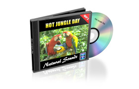 Relaxation Audio Sounds Hot Jungle Day