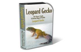 WP Templates Leopard Gecko