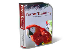 WP Templates Parrot Training