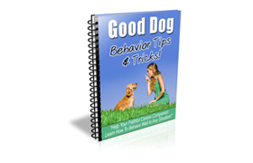 Good Dog Behavior Tips And Tricks