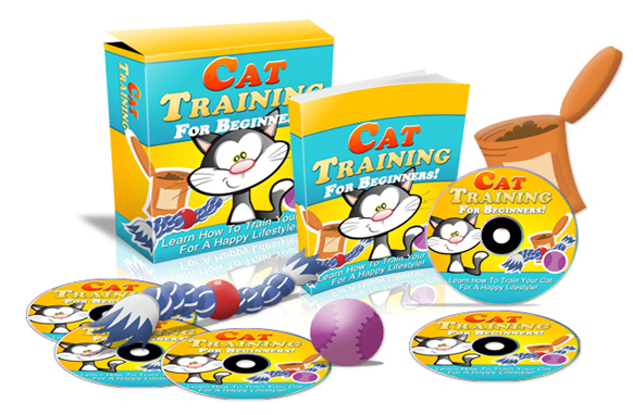 Cat Training For Beginners Template