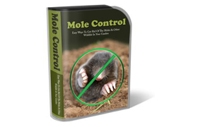 WP Theme and HTML Template Mole Control