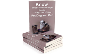 Know What Your Little Angel Needs Taking Care of Your Pet Dog and Cat