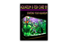 Aquarium Fish Care 101