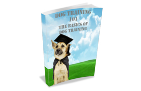 Dog Training Tips 101