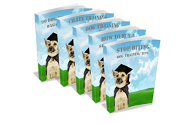 Dog Training Tips Collection