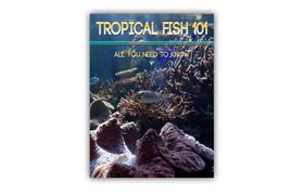 Tropical Fish 101