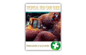 Tropical Fish Care Guide