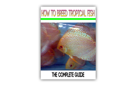 How To Breed Tropical Fish