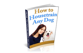 How To Housetrain Any Dog