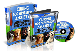 Curing Dog Separation Anxiety End Bad Dog Habits Forever