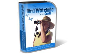 Bird Watching HTML PSD Template