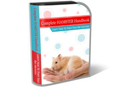 Training Hamster HTML PSD Template