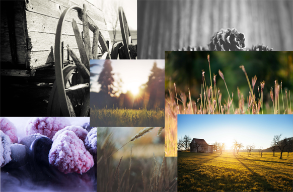 33 Farming Stock Images