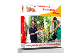 Growing Tomatoes Blog