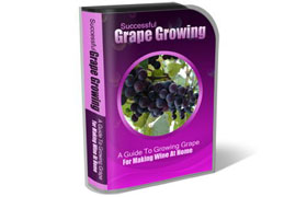 Grape Growing WP HTML PSD Template