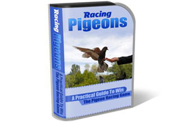 Racing Pigeons WP HTML PSD Template