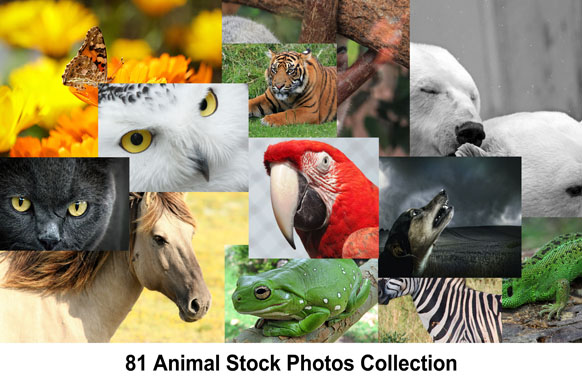 81 Animal Stock Photos Collection