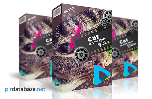 Cat Stock 4K UHD Videos
