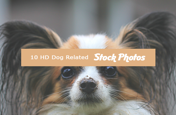10 HD Dog Related Stock Images
