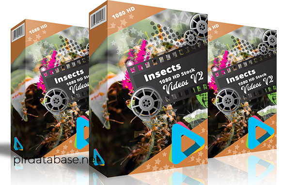 Insects 1080 HD Stock Videos V2.1