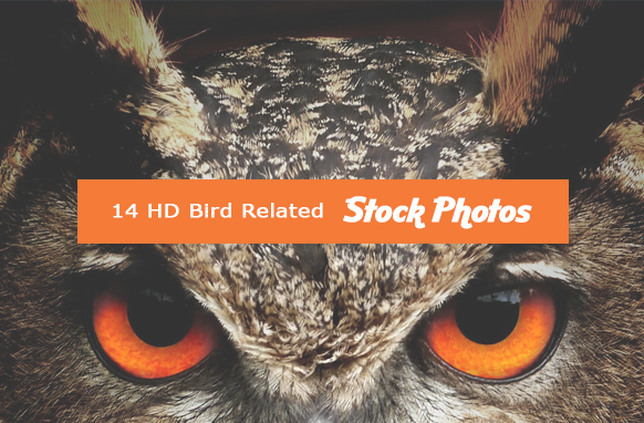14 HD Bird Related Stock Images