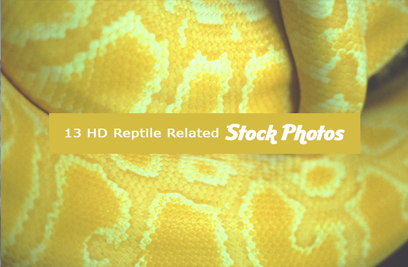 13 HD Reptile Related Stock Images