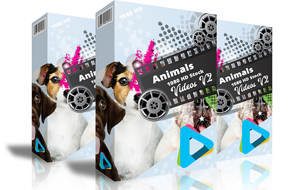 Animals 1080 HD Stock Videos V2