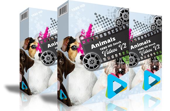 Animals 1080 HD Stock Videos V2.1
