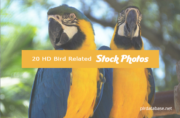 20 HD Bird Related Stock Photos