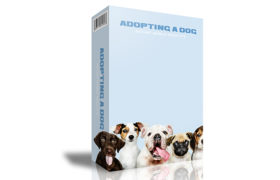 Adopting A Dog Instant Mobile Video Site