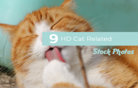 9 HD Cat Related Stock Photos