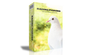 Racing Pigeons Instant Mobile Video Site